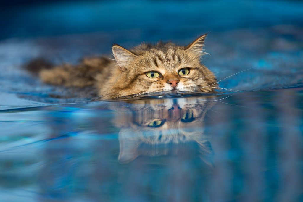 Thinking is like a Swimming Cat